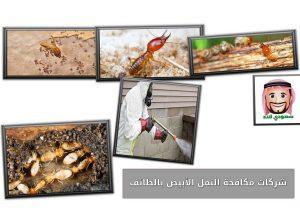 شركات مكافحة النمل الأبيض بالطائف